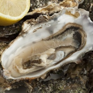 best oyster shucking knife