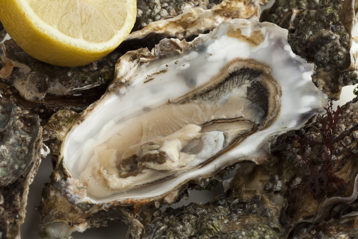 Best Oyster Shucking Knife (Plus a Full Guide to Shucking)